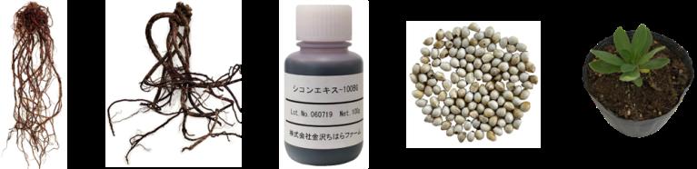 加賀本紫ラインナップ