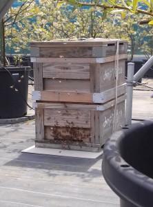 ミツバチの巣箱H28